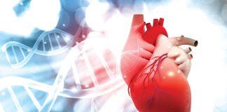 srce i genetika