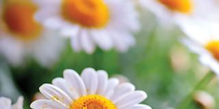 Floriterapija