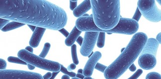 Probiotici i prebiotici