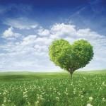 Graviola, drevna mudrost prirode