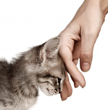 Vlasnici mačaka žive lepše