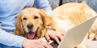 Psi i starenje