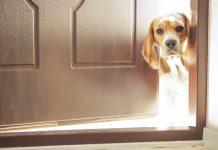 zaštita psa od parazita